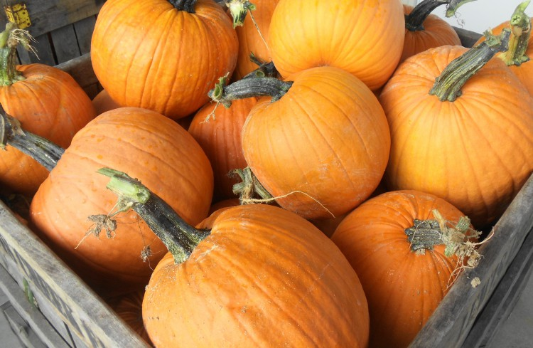 pumpkins-in-crate