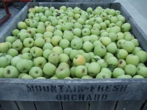 Fresh Apples, Pumpkins and Sweet Treats
