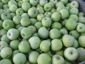 Fresh Picked Apples, Bakery, Cider and more All at the Farm!