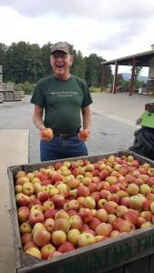Fresh Picked Fuji Apples